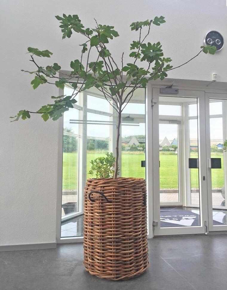 A2 Living ratán cesta XXL 84 cm escandinavos decorativas pflanzkorb retención