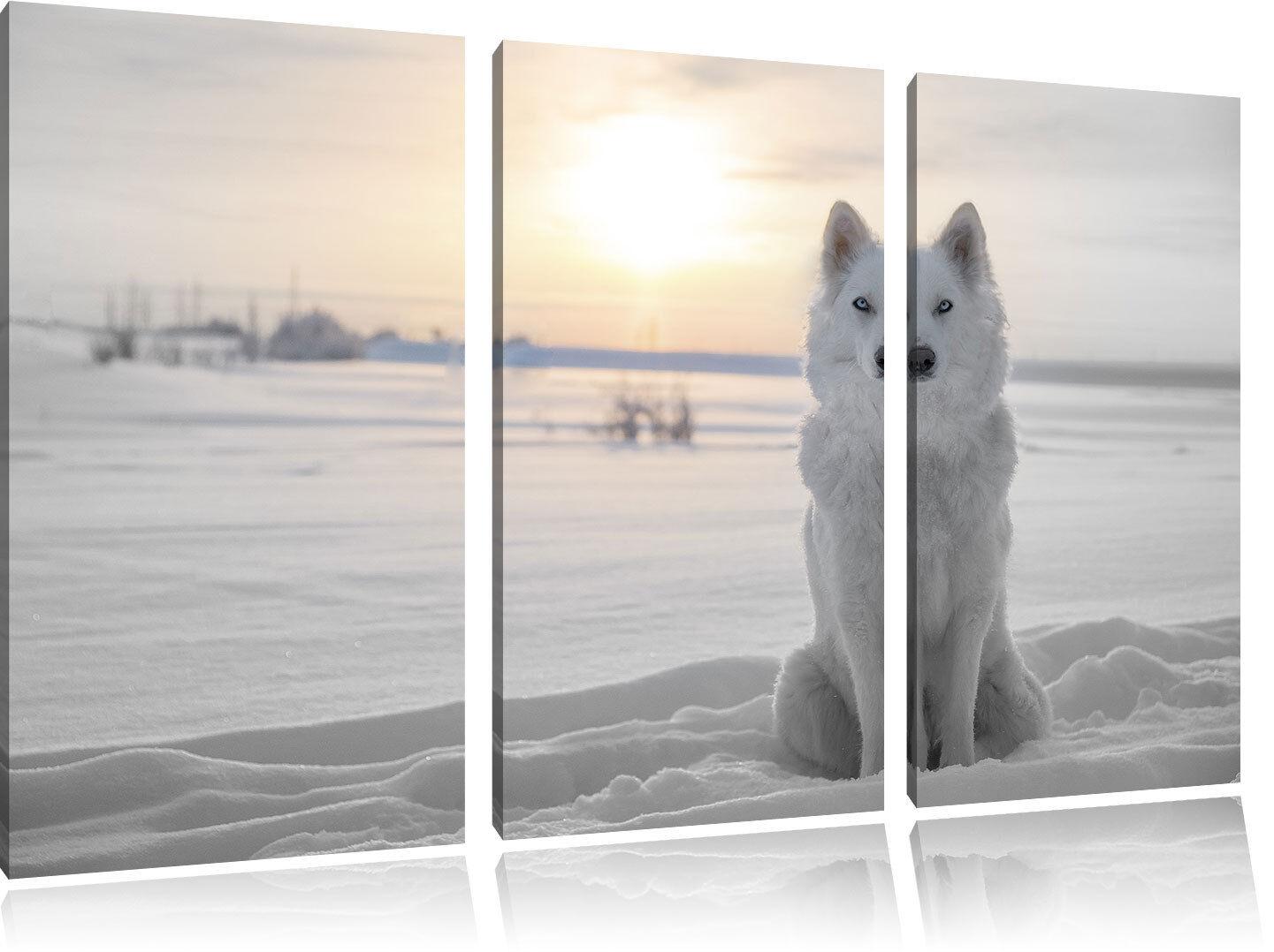 Bianco Wolf Im Neve B&w Dettagli 3-Teiler Quadro su Tel Decorazione Parete