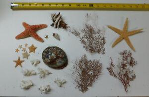 Mixed Starfish, Coral, Dried Sea life Shells Craft collector Decor Lot # 36-L