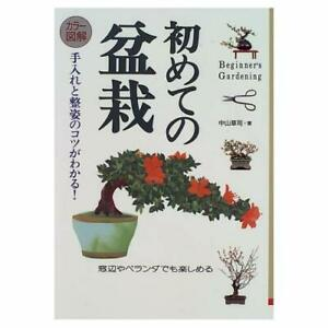 Color-illustration-for-the-first-time-of-bonsai-Tips-Care-and-Seisugata-is