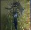 YuGiOh-Konami-EOJ-JP007-Ultimate-Rare-3D-Cyber-Prima-Japanese-Uncensored-Artwork thumbnail 2