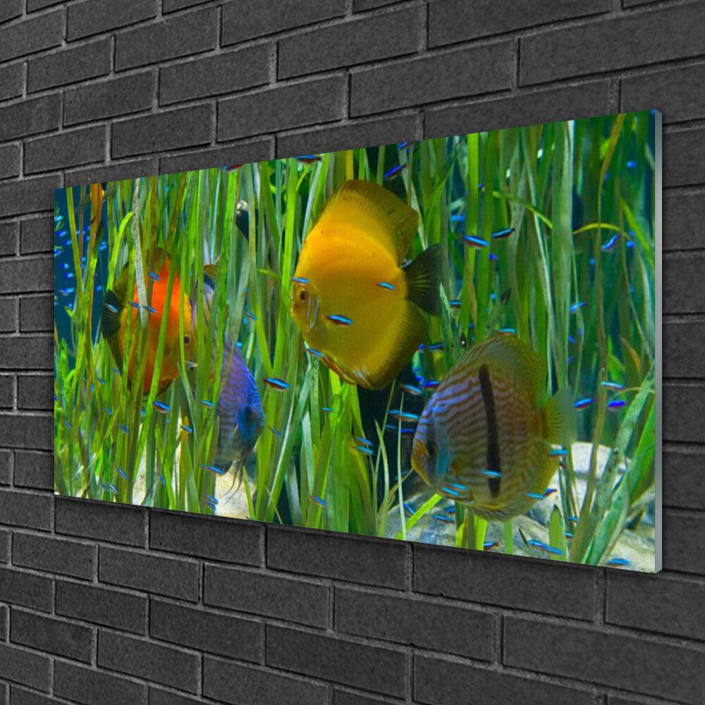 Image sur verre Tableau Impression 100x50 Nature Poissons