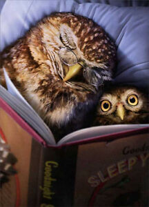 owl bed time story father s day card greeting card by avanti press