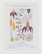 FICHE N°6  PLANTE MEDICINALE/COMITE INTERMINISTERIEL-DOUCE-AMERE/Ed.Montaudon
