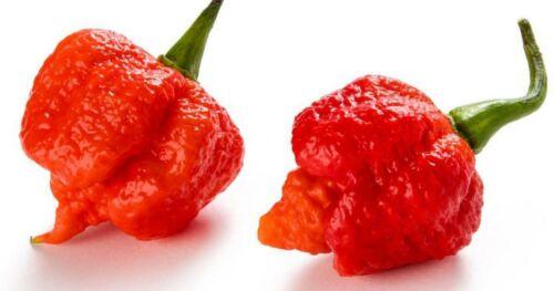 200 Carolina Reaper Plants Seeds Rare Vegetables Most Red Hot Chilli Pepper