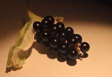 BLACKBERRY-LEOPARD LILY BELAMCANDA CHINENSIS (100) SEEDS