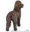 Cockapoo-Bronze-ornament-figurine-sculpture-collectable-Doodle-Dog-lover-gift thumbnail 3