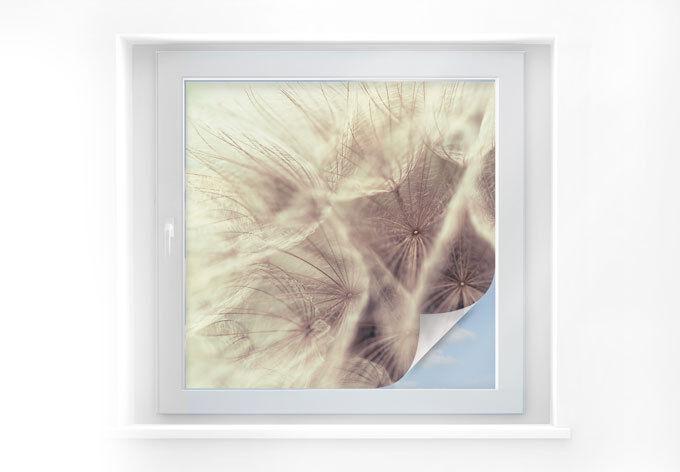 Pellicola prossoezione visiva PUSTEBLUME close up Fensterdeko autoadesivo latte pellicola vetro
