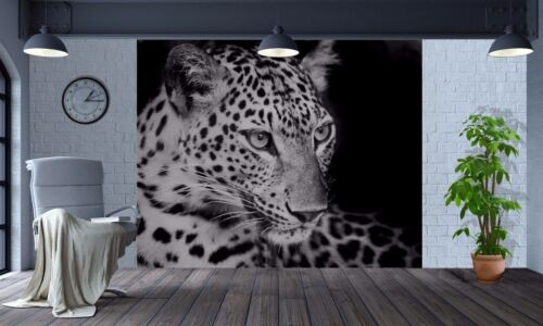 23991319 Wallpaper Black and White Leopard Nature Wildlife wall mural photo