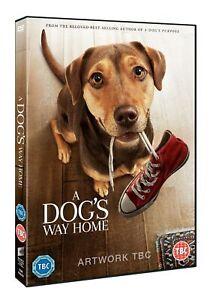 A-Dog-039-s-Way-Home-DVD