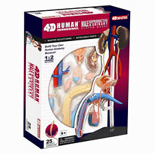 Male Reproductive & Urinary System HUMAN ANATOMY MODEL,4D Kit # 26063 TEDCO TOYS