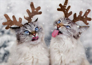 image is loading reindeer cats catching snowflakes box of 10 christmas