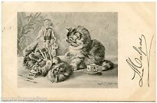 Tucker . a/s . Jolis chats . Jouets anciens. Poupée  .Nice cats . Old toys. Doll