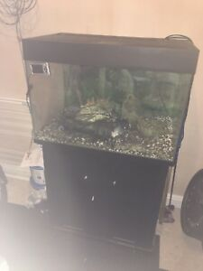 Large Fish Tank - Burntwood, United Kingdom - Large Fish Tank - Burntwood, United Kingdom