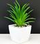 Artificial-Succulent-Plants-Small-Fake-Succulent-Bonsai-Garden-Miniature-Decor thumbnail 7
