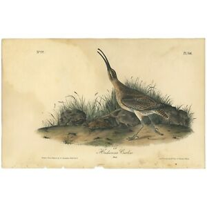 Audubon Octavo 1st Ed 1840 hand-colored lithograph Pl 356 Hudsonian Curlew