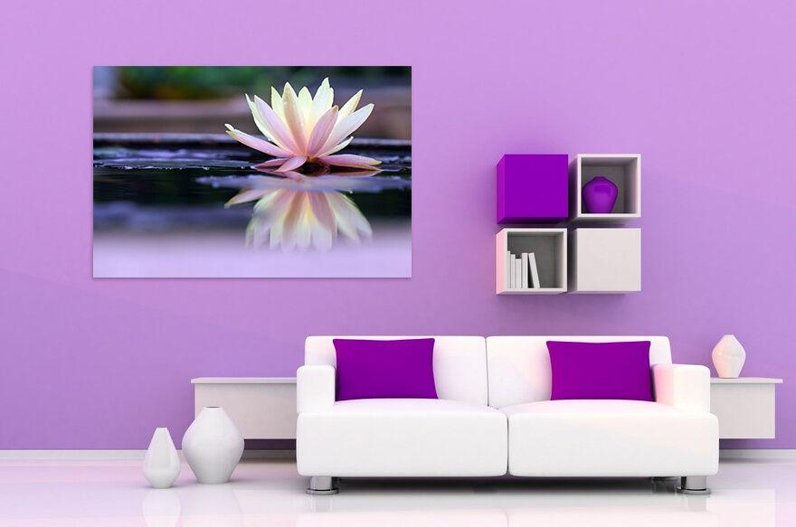 3D pink Lotus 523 Fototapeten Wandbild BildTapete AJSTORE DE Lemon