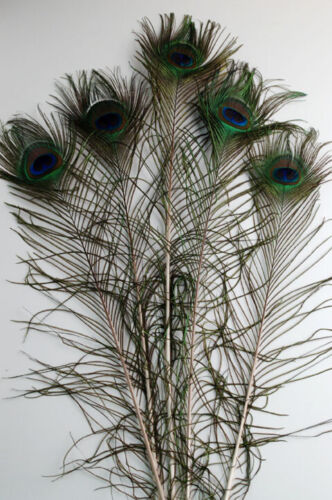 """50 Pcs PEACOCK TAILS Natural Feathers 35/""""-40/"""" Craft////Bridal//Costume//Halloween"""