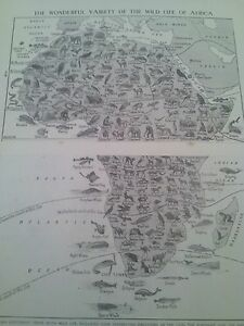 Map-of-Animals-Wildlife-Birds-Fish-of-Africa-1924-2-Small-Pages-to-Frame