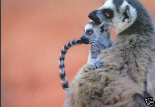 Katta Postkarte Idylle Mutter mit Baby Madagaskar