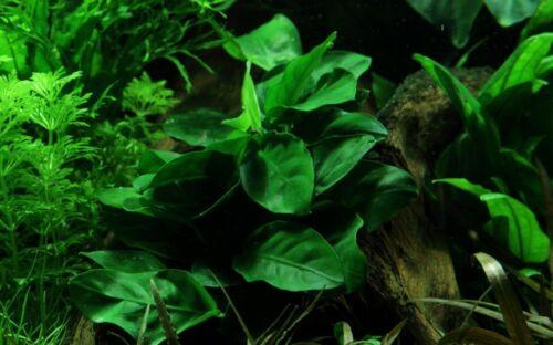 Nano Set Avec 6 Simples Petits Tropica Pot Plantes Aquarium Kit De Nº 5