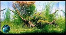Weeping Moss - Live Cherry Crystal Red Shrimp Aquarium