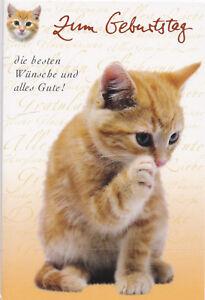 Klappkarte Susse Katze Mit Besten Wunschen Zum Geburtstag Birthday