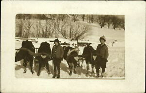 RPPC Saxtons River Vermont VT ~ boys & young oxen pull sled milk? 1912 postcard