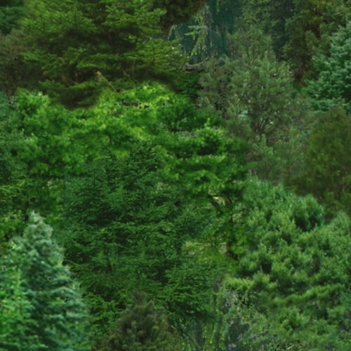 Elizabeth Studio ES176 100/% Cotton Patchwork Quilting Landscape Trees