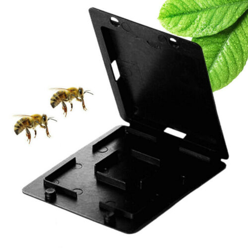 Beekeeping Beehive Hive Beetle Bee Housefly Insect Trap Case Cover Plastic Black
