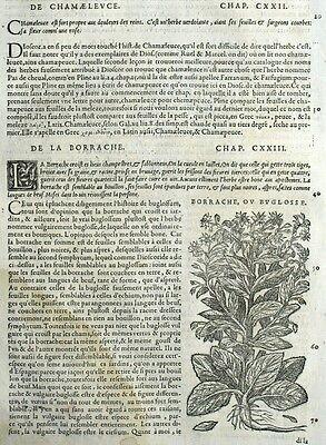 Ochsenzunge Borretsch Gravur Botanik Matthioli Mattioli Matthiole Dioscorides Perfect In Workmanship Art