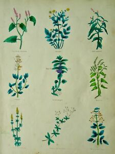 The Complete Herbal PLATE 2 Botanical illustration by Nicholas Culpeper c1850