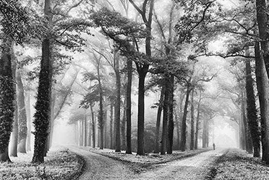 Lars van de Goor  Turning Left Keilrahmen-Bild Leinwand Wald Bäume Weg Nebel