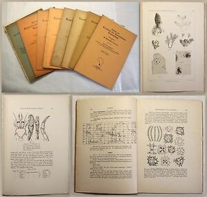 Michaelsen-Meeresfauna-Westafrikas-8-Hefte1914-1932-Botanik-Naturkunde-xz
