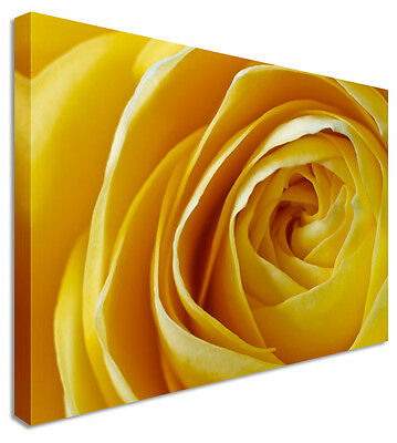 Yellow Love Rose Floral Flower Canvas Print - Large+ Any Size