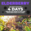 Immune-System-Booster-with-Elderberry-Vitamin-C-Echinacea-amp-Probiotics thumbnail 3