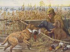 CHESAPEAKE BAY RETRIEVER DOG GREETINGS NOTE CARD DOG RETRIEVES DUCK FROM WATER