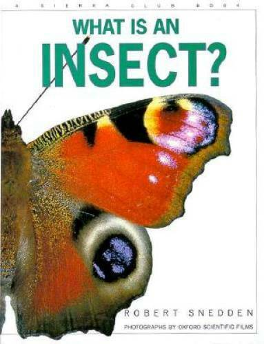 What Is an Insect - Hardcover By Snedden, Robert - VERY GOOD