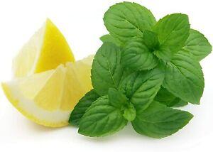 Lemon Mint Seeds | Non-GMO | Fresh Herb Garden Seeds