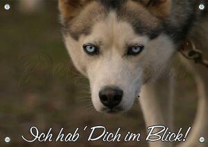 Husky Sibérien - Panneau d'avertissement en métal pour chien Shield Massive -1.5mm Dick Dauerh