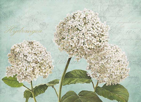 Remy Dellal  Hydrangeas I Aqua Keilrahmen-Bild Leinwand Blaumen Landhaus Blüten
