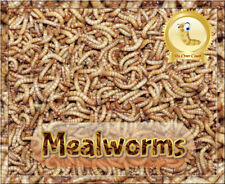 100 Giant Mealworms *organically Raised* Plus up To10 Extra & Wheat Bran