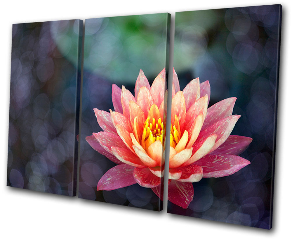 Floral Water Lily Lily Lily Flowers TREBLE TELA parete arte foto stampa 773c28
