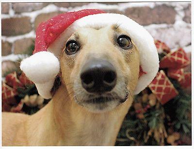 Postcard Greyhound in a Christmas Santa Hat