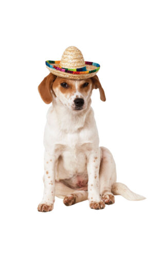 Pet Accessory ~ Pet Sombrero