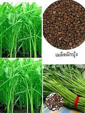3x420 Seeds Chia tai Chineses convolvulus Thai Vegetable Organic garden plant