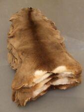 Roe Deer Skin, fur, rug, hide, taxidermy, fly tying, Chevreuil, capriolo B-grade