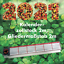 Zollstock-2m-zweiseitig-bedruckt-Motiv-Kalender-2021 Indexbild 1