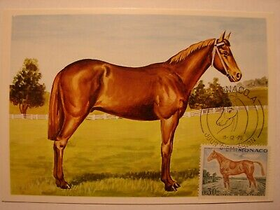(bu241) Animal Horse (paard) 1970 Monaco Maximum Maxi Card Postcard DesempeñO Confiable