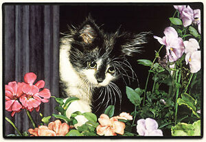 DOOR MATS - KITTEN WITH SPRING FLOWERS DOORMAT - CAT WELCOME MAT - CAT DOOR MAT